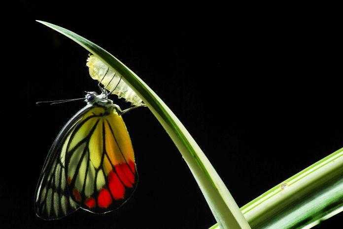 best transformational leaders